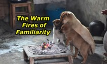 warm fires of familiarity